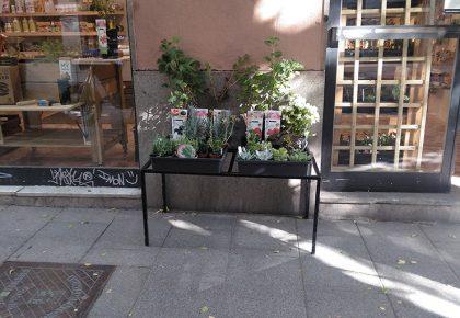 Cultivando EnLavapiés